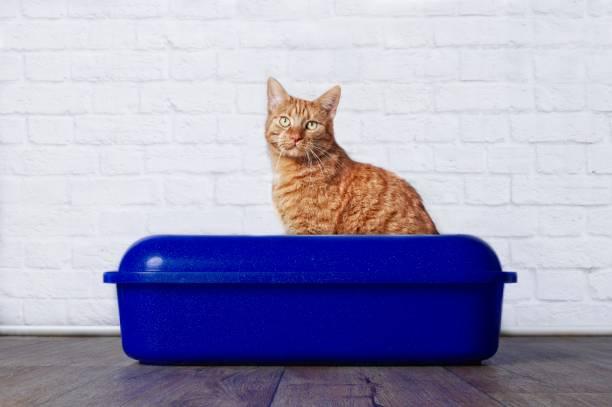 incontinencia en gatos prevencion