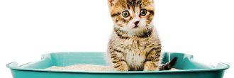 Incontinencia urinaria en gatos