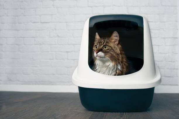 la incontinencia en gatos