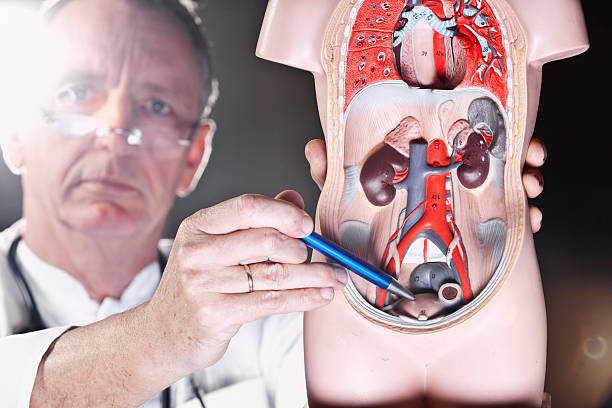 tampones para incontinencia urinaria