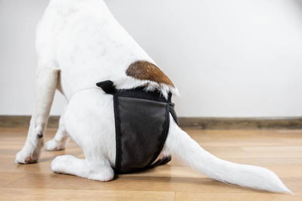 perro con trastorno de incontinencia