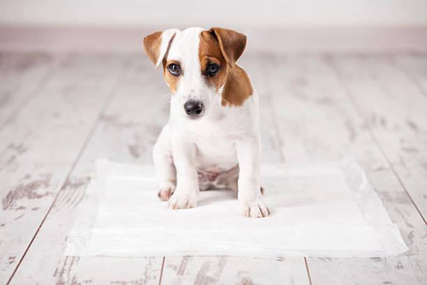 perro con incontinencia
